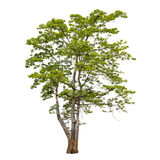 Συλλογή των δέντρων που απομονώνεται στο άσπρο υπόβαθρο Στοκ Εικόνα