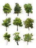 Συλλογή των δέντρων που απομονώνεται στο άσπρο υπόβαθρο Στοκ φωτογραφίες με δικαίωμα ελεύθερης χρήσης