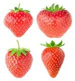 Συλλογή των απομονωμένων φραουλών στοκ εικόνες με δικαίωμα ελεύθερης χρήσης