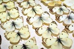 Συλλογή των βικτοριανών πεταλούδων Στοκ Φωτογραφία