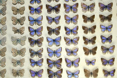 Συλλογή των βικτοριανών πεταλούδων Στοκ εικόνες με δικαίωμα ελεύθερης χρήσης