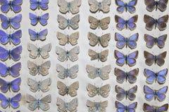Συλλογή των βικτοριανών πεταλούδων Στοκ Εικόνες