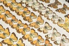 Συλλογή των βικτοριανών πεταλούδων Στοκ Φωτογραφίες