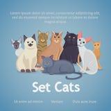 Συλλογή των γατών των διαφορετικών φυλών γάτες που τίθενται απεικόνιση αποθεμάτων