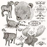 Συλλογή των εκλεκτής ποιότητας συρμένων χέρι ζώων Στοκ εικόνες με δικαίωμα ελεύθερης χρήσης