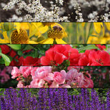 Συλλογή των ζωηρόχρωμου εμβλημάτων ή του υποβάθρου λουλουδιών Στοκ φωτογραφία με δικαίωμα ελεύθερης χρήσης