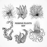 Συλλογή των θαλασσίων φυτών, των φύλλων και του φυκιού ελεύθερη απεικόνιση δικαιώματος