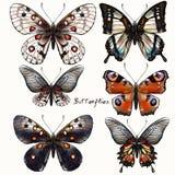 Συλλογή των διανυσματικών εκλεκτής ποιότητας ρεαλιστικών πεταλούδων Στοκ Φωτογραφία