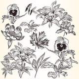 Συλλογή των διανυσματικών διακοσμητικών συρμένων χέρι λουλουδιών για το σχέδιο Στοκ εικόνες με δικαίωμα ελεύθερης χρήσης