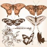Συλλογή των διανυσματικών πεταλούδων για το σχέδιο Στοκ Φωτογραφίες