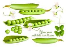 Συλλογή των διανυσματικών πράσινων μπιζελιών απεικονίσεων διανυσματική απεικόνιση