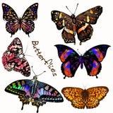 Συλλογή των διανυσματικών ρεαλιστικών ζωηρόχρωμων πεταλούδων Στοκ φωτογραφίες με δικαίωμα ελεύθερης χρήσης