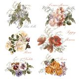 Συλλογή των διανυσματικών ρεαλιστικών λουλουδιών στο ύφος watercolor Στοκ φωτογραφία με δικαίωμα ελεύθερης χρήσης
