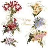 Συλλογή των διανυσματικών ρεαλιστικών λουλουδιών στο ύφος watercolor Στοκ Εικόνα