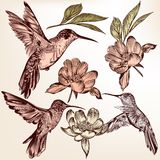 Συλλογή των διανυσματικών συρμένων χέρι κολιβρίων και των λουλουδιών Στοκ Εικόνες