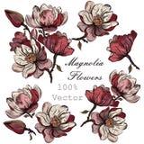 Συλλογή των διανυσματικών συρμένων χέρι λουλουδιών magnolia χαραγμένο sty Στοκ φωτογραφία με δικαίωμα ελεύθερης χρήσης