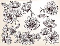 Συλλογή των διανυσματικών συρμένων χέρι λουλουδιών magnolia χαραγμένο sty Στοκ Εικόνα