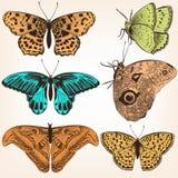 Συλλογή των διανυσματικών συρμένων χέρι πεταλούδων Στοκ Φωτογραφία
