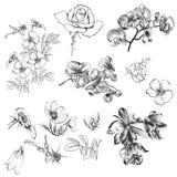 Συλλογή των διανυσματικών συρμένων χέρι floral στοιχείων στο χαραγμένο styl Στοκ Φωτογραφία