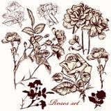 Συλλογή των διανυσματικών τριαντάφυλλων Στοκ φωτογραφία με δικαίωμα ελεύθερης χρήσης