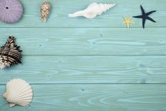 Συλλογή των κοχυλιών στο ξύλο στοκ εικόνες με δικαίωμα ελεύθερης χρήσης
