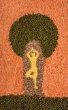 Συλλογή των ξηρών δημητριακών υπό μορφή σκιαγραφίας του ατόμου στο TR Στοκ Εικόνες