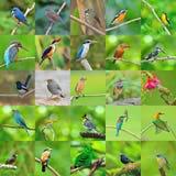Συλλογή των πουλιών Στοκ Εικόνα