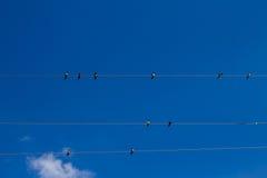 Συλλογή των πουλιών Στοκ φωτογραφία με δικαίωμα ελεύθερης χρήσης