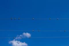 Συλλογή των πουλιών Στοκ Φωτογραφίες