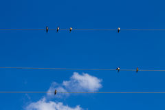 Συλλογή των πουλιών Στοκ Εικόνες
