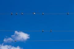 Συλλογή των πουλιών Στοκ εικόνες με δικαίωμα ελεύθερης χρήσης