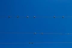 Συλλογή των πουλιών Στοκ Φωτογραφία