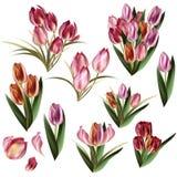 Συλλογή των ρεαλιστικών λουλουδιών κρητιδογραφιών Στοκ εικόνες με δικαίωμα ελεύθερης χρήσης