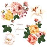 Συλλογή των ρεαλιστικών λουλουδιών Στοκ Εικόνες