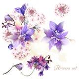 Συλλογή των τρυφερών λουλουδιών Στοκ Εικόνες