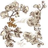 Συλλογή των υψηλών λεπτομερών διανυσματικών λουλουδιών ορχιδεών Στοκ Εικόνα