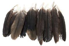 Συλλογή των φτερών πουλιών στις ποικίλες σκιές του γκρι Στοκ φωτογραφία με δικαίωμα ελεύθερης χρήσης