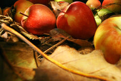 Συλλογή των όμορφων μήλων Στοκ εικόνα με δικαίωμα ελεύθερης χρήσης