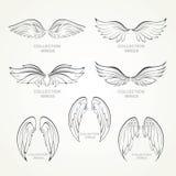 Συλλογή φτερών Στοκ Εικόνες