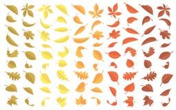 Συλλογή φύλλων φθινοπώρου Στοκ Φωτογραφία