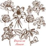 Συλλογή χαραγμένων των διάνυσμα λουλουδιών στο παλαιό ύφος Στοκ εικόνες με δικαίωμα ελεύθερης χρήσης