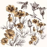 Συλλογή χαραγμένων των διάνυσμα συρμένων χέρι λουλουδιών στο εκλεκτής ποιότητας styl Στοκ Φωτογραφίες