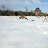 Συλλογή χειμερινών ζώων. Στοκ φωτογραφία με δικαίωμα ελεύθερης χρήσης