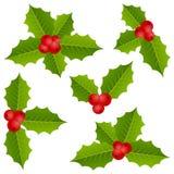 Συλλογή Χριστουγέννων μούρων της Holly Στοκ Εικόνες
