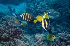 Συλλογή ψαριών Στοκ Εικόνα