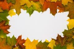 σφένδαμνος φύλλων πλαισίων φθινοπώρου Στοκ Εικόνες