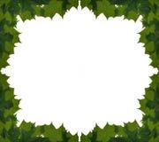 σφένδαμνος φύλλων πλαισί&omega Στοκ εικόνα με δικαίωμα ελεύθερης χρήσης
