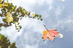 σφένδαμνος φύλλων πτώσης του Καναδά φθινοπώρου το φύλλο των maplelies στην επιφάνεια νερού λιμνών ` s Στοκ Φωτογραφίες