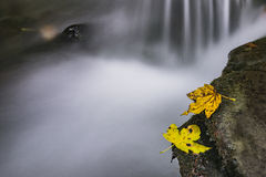 σφένδαμνος φύλλων πτώσης του Καναδά φθινοπώρου Στοκ Φωτογραφίες