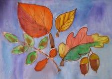 Σφένδαμνος φύλλων φθινοπώρου, βαλανιδιά, σημύδα Στοκ φωτογραφία με δικαίωμα ελεύθερης χρήσης